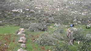 مصادرة أراضي 20-5-2015Confiscation of Lands 20-5-2015הפקעת קרקעות 20-05-2015Arazi Işgalleri 20-5-2015Конфискация земель 20-5-2015