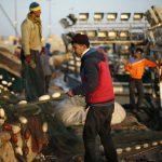 إسرائيل تقضي على قطاع صيد الأسماك في قطاع غزةIsrael destroying Gaza's fishing sectorישראל מחסלת את ענף הדיג ברצועת עזה